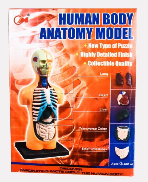 4D пазл Анатомия человека, 12 дет. 3101 Китай