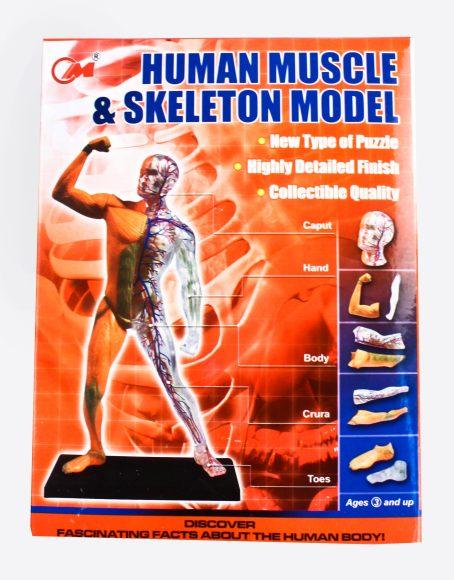 4D пазл Анатомия человека, 30 дет. 3102 Китай