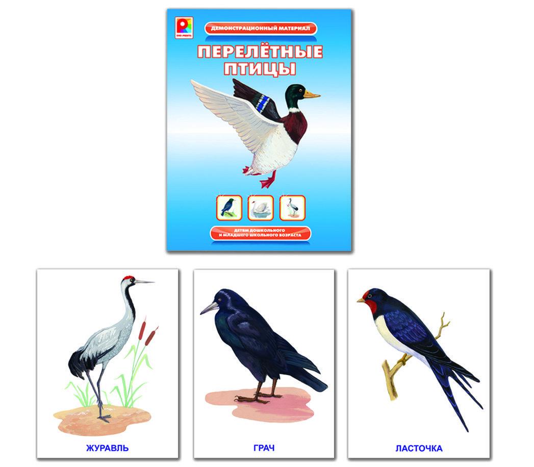 всех птицы демонстрационный материал новом снимке